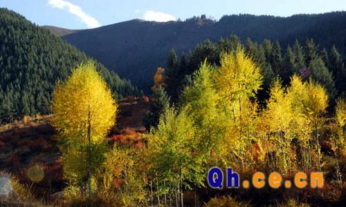 青海省仙米国家级森林公园[组图]
