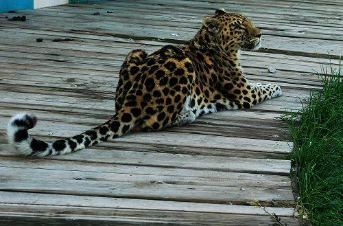 大青山野生动物园是呼和浩特